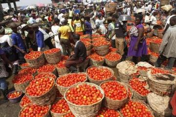Tomatoes are displayed in baskets for sale at a local food market in Lagos December 16, 2013. REUTERS/Akintunde Akinleye