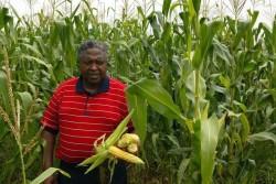 South Africa farmer Motsepe Matlala  inspects his crop in  file photo.  REUTERS/Siphiwe Sibeko