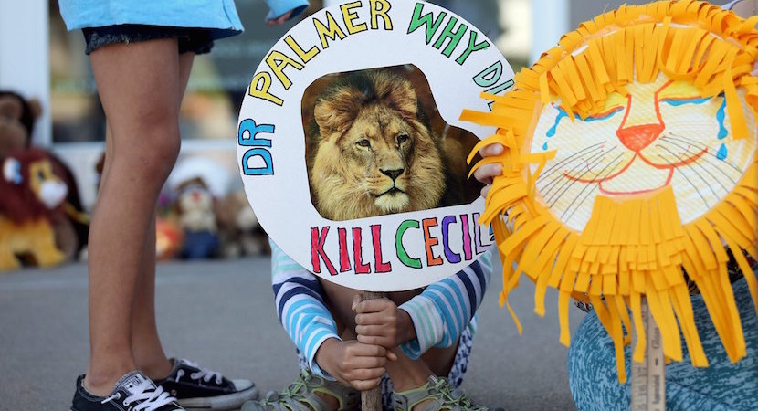 Cathy Buckle: Cecil the Lion depended on Zim's morally bankrupt leadership