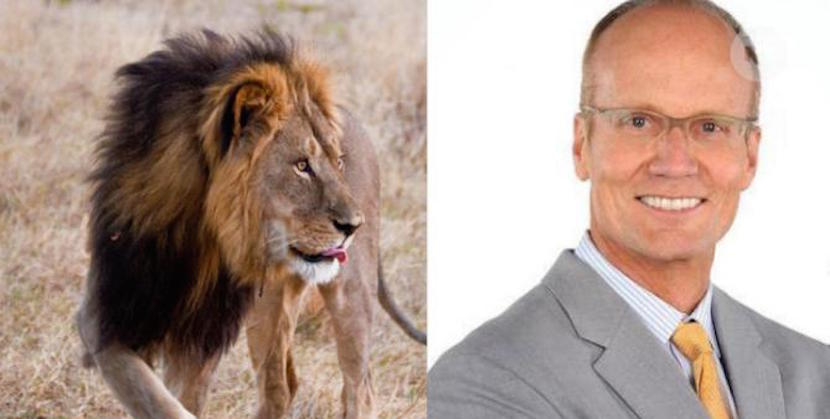 Jani Allan: Cecil the lion's killer now one getting hunted – by outraged Americans