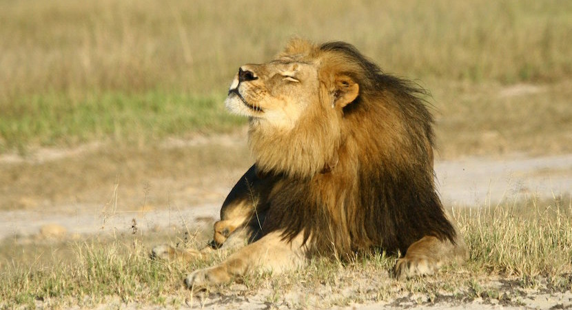 Cecil's brother Jericho not shot – Zim imposes indefinite ban on hunting