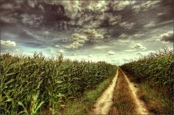 Africa_corn_farming