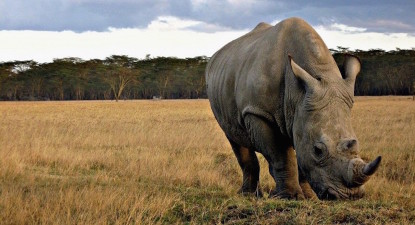 Court lifts domestic rhino horn trading ban