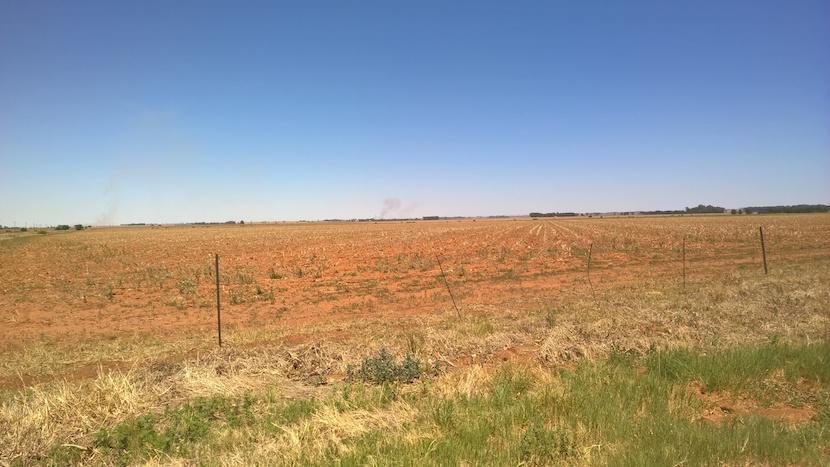 A barren maize field on a road to Parys.