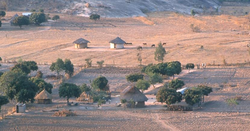 Shona farm