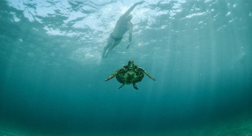 Lewis Pugh's tale of devastation: Turning turtle on illicit wildlife trade