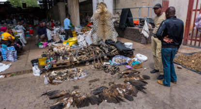 WATCH: Bustling trade in illegal wildlife products at Joburg market – exposed!