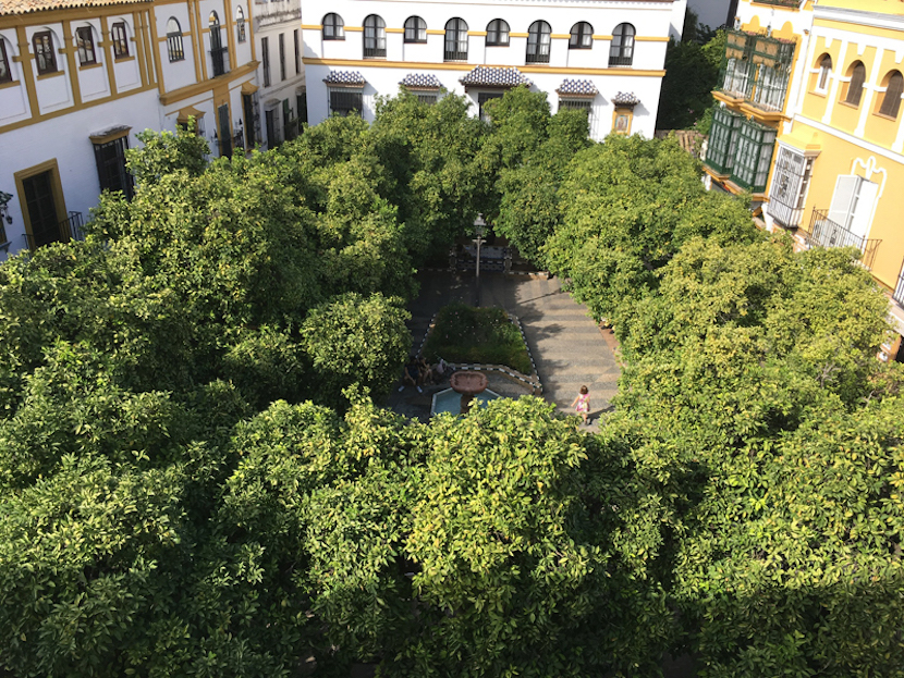 In Barrio Santa Cruz, the historic Jewish quarter and oldest neighbourhood in the city – a labyrinthine maze of narrow streets – lies the orange tree-lined square, Plaza Doña Elvira, close by to where the Spanish writer Cervantes hung his hat in the late 1500s.