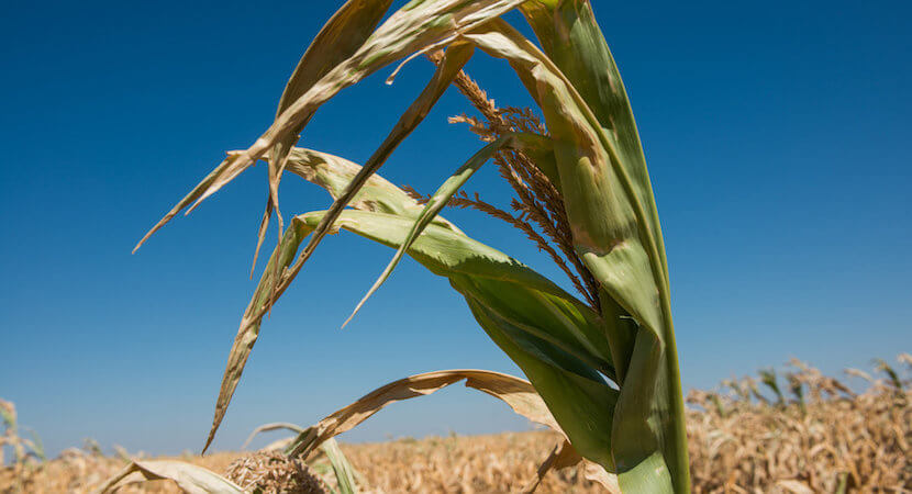 Record corn exports from SA to EU: Another reason why land debate is so key
