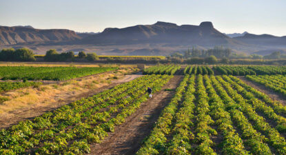 Want land reform to succeed? Then don't destabilise agriculture, banks