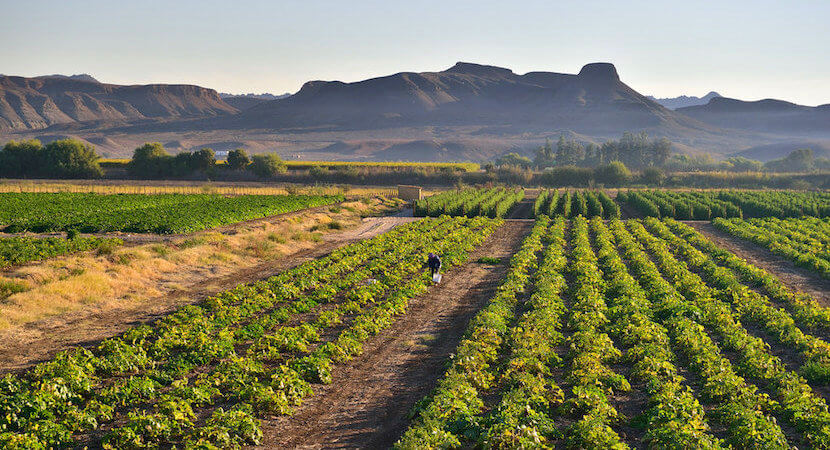 WORLDVIEW: Could farmers save the SA economy?