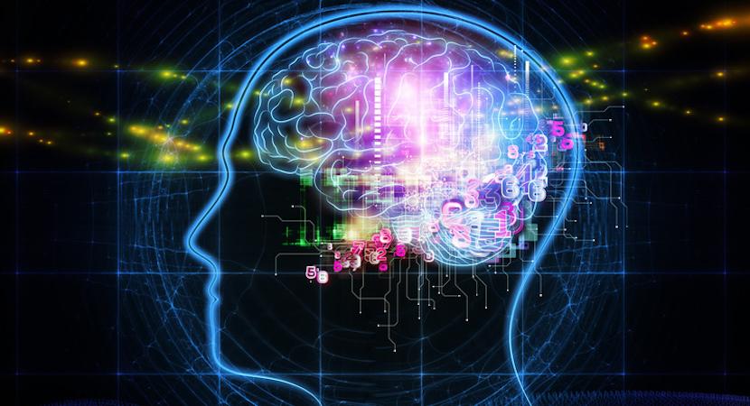 brain health, humans