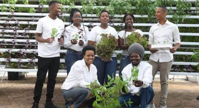Rooftop hydroponic farming comes to Joburg's inner-city CBD