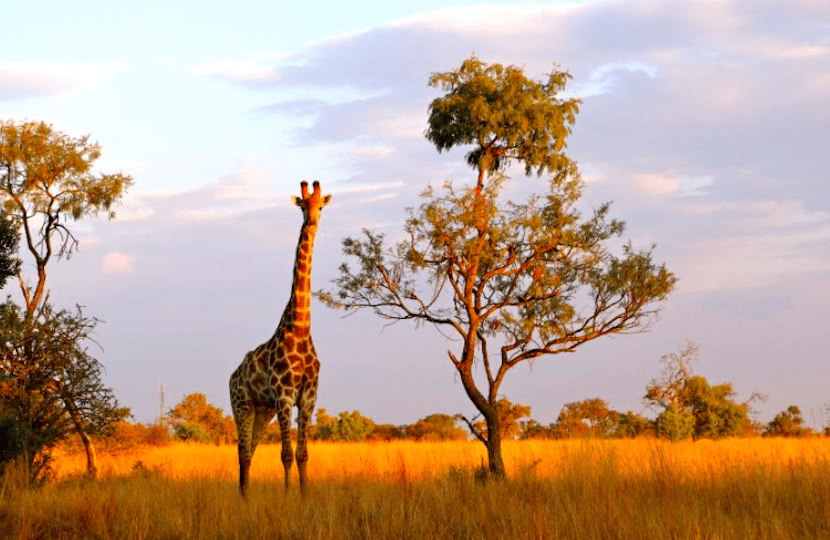 Tourism safari travel