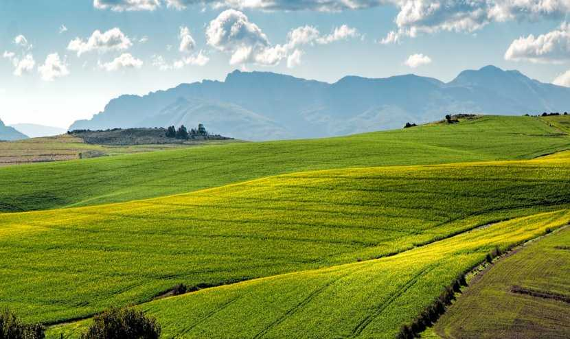 Land expropriation, land reform