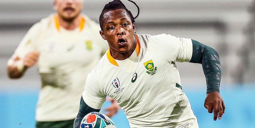 Sbu Nkosi, Springboks