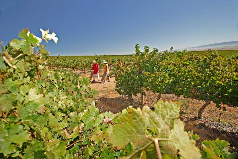 Swartland Wine Route - West Coast, South Africa
