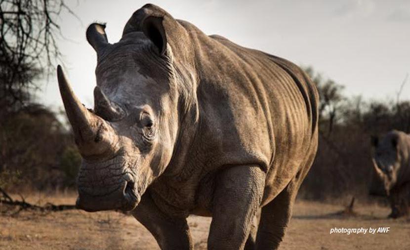 rhino killings
